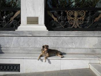 The Dog of Luxury