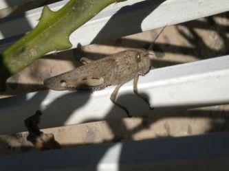 My Friend, The Grasshopper