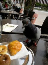 Eating With Pigeons