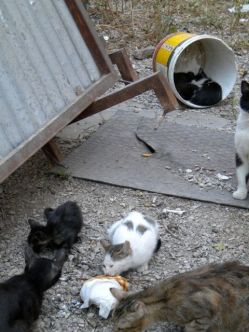 Cat Colony on Patission