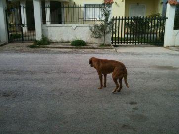 Litsa's Dogs
